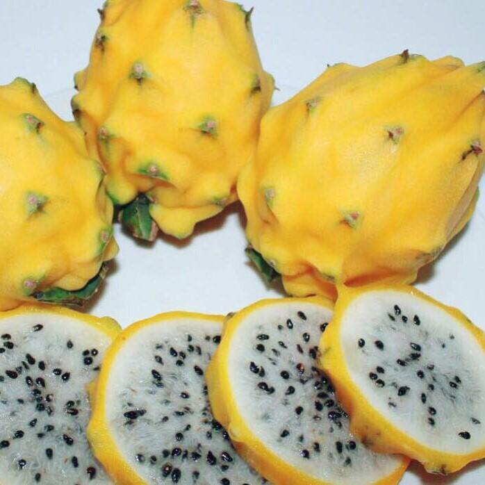 επαγγελματική εγκατάσταση Φρούτων του Δράκου